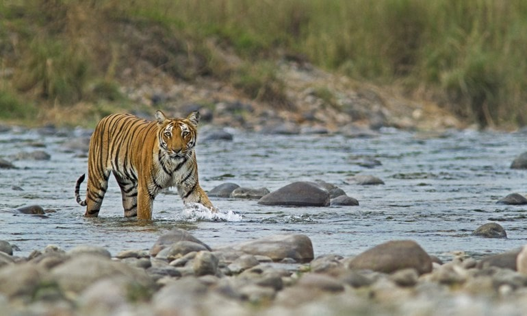 Where Is Rajaji National Park In India In Hindi