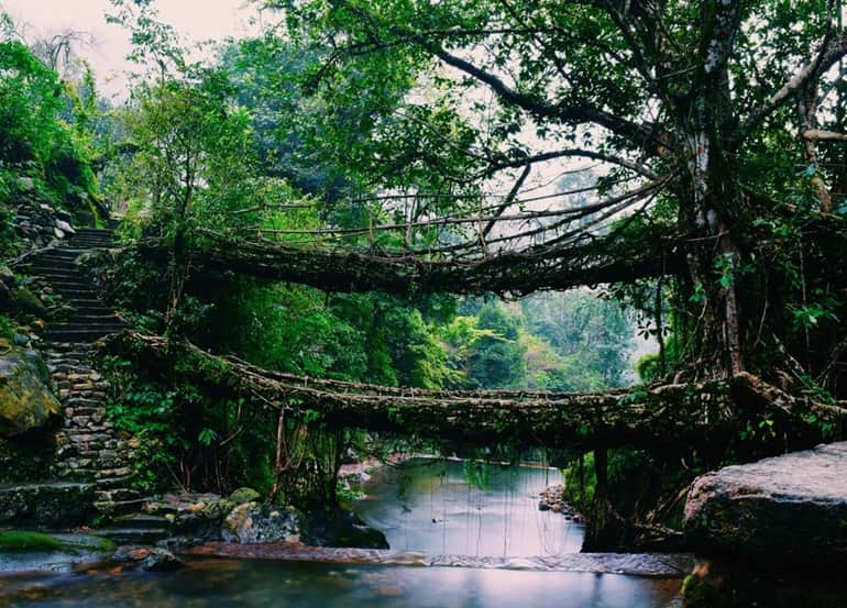 Cherrapunji Ka Aakarshan Sthal Double Decker Living Root Bridge In Hindi