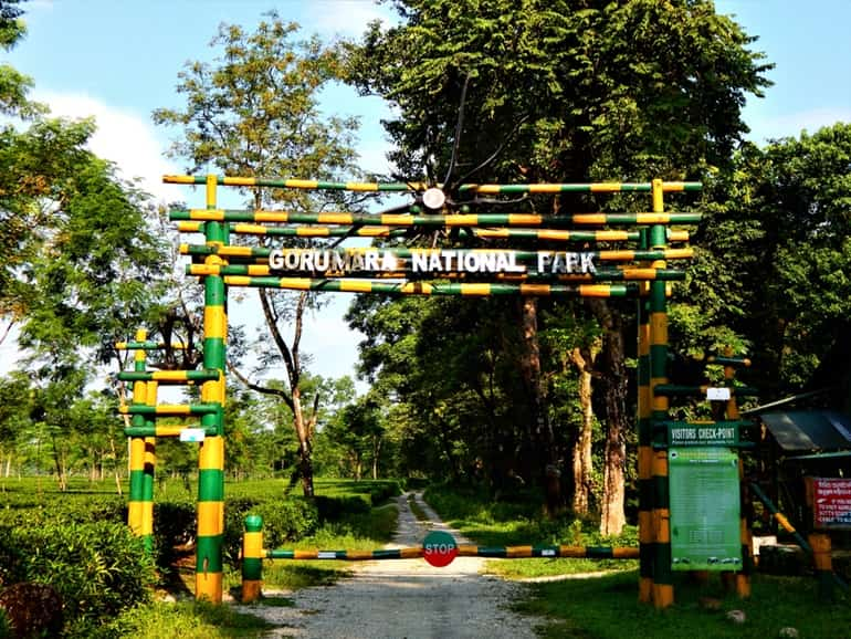 New Jalpaiguri Ke Prasidh Paryatan Sthal Gorumara National Park In Hindi