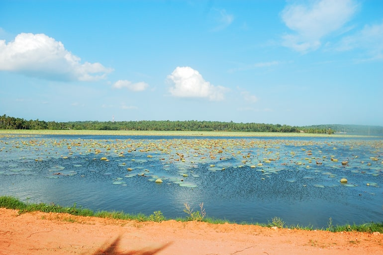 वेल्लयानी झील - Vellayani Lake In Hindi