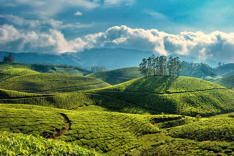 टी गार्डन्स कुरसेओंग – Tea Gardens in Kurseong in Hindi