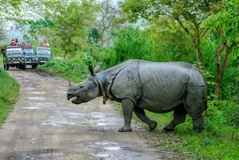 काजीरंगा राष्ट्रीय उद्यान – Kaziranga National Park in Hindi