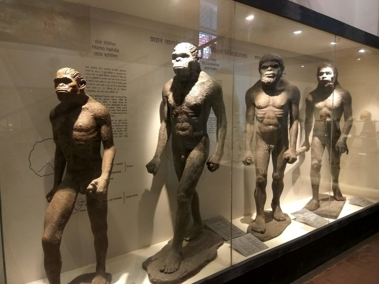 भारतीय संग्रहालय का संग्रह - Collection in Indian Museum in Hindi