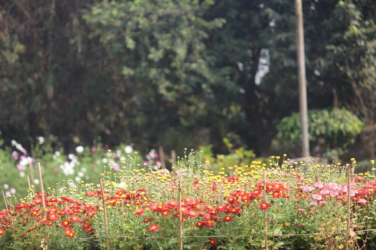 बॉटनिकल गार्डन – Botanical Garden in Hindi