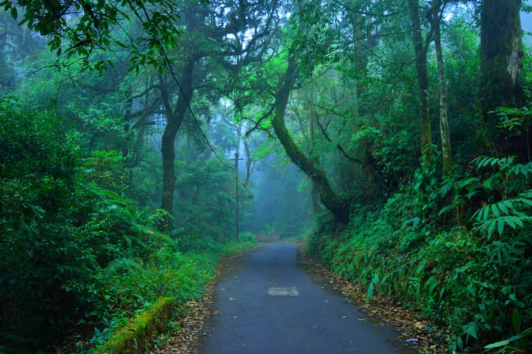 त्रिचुर फारेस्ट – Trichur Forest in Hindi